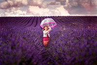 Lavender Picking, Hitchin